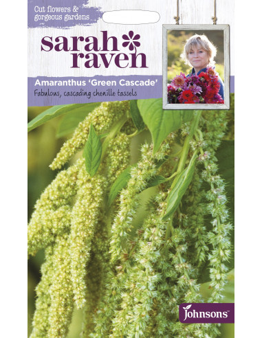 Sarah Raven Amaranthus 'Green Cascade'