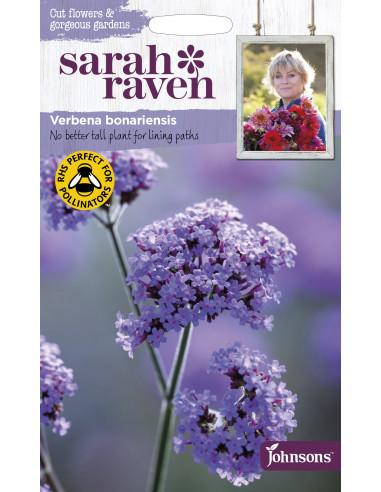 Sarah Raven Verbena bonariensis