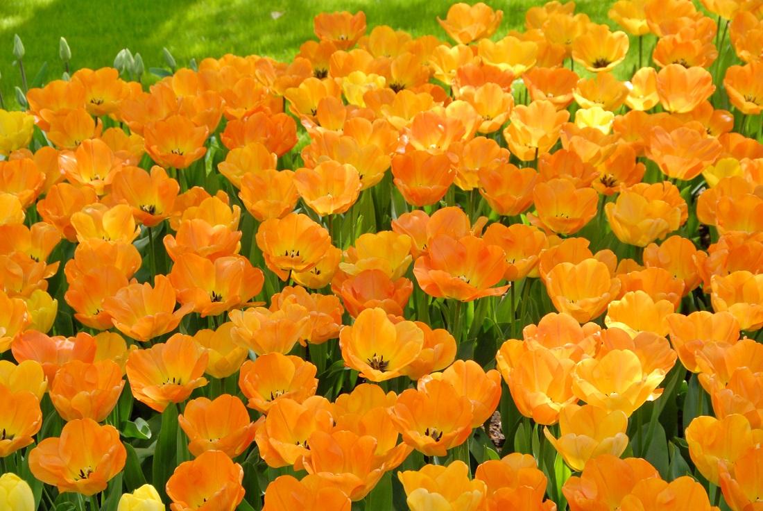 Forår i haven - Hos den engelske gartner